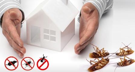 أفضل شركة لابادة الحشرات في الرياض
