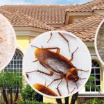 شركة مكافحة حشرات شرق الرياض للقضاء على جميع الحشرات 0507007581