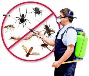 أفضل شركة مكافحة حشرات وفئران