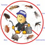 إن كنت تعاني من انتشار الحشرات في منزلك ….. إليك عملينا الكريم أفضل شركة رش مبيدات بالرياض 0507007581